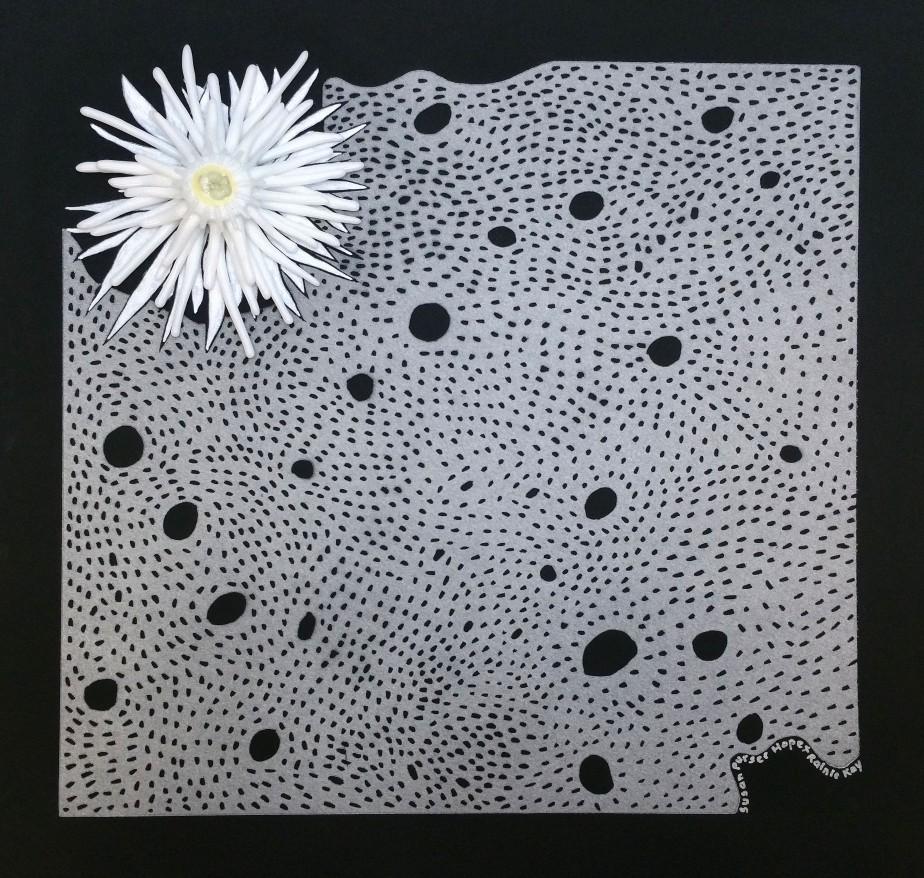 White anenome on Lissoclinum perforatum
